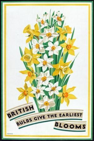 British Bulbs Give the Earliest Blooms, from the Series 'British Bulbs for Home Gardens'