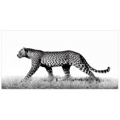 Fearless 2 - Free Floating Tempered Glass Panel Graphic Wall Art