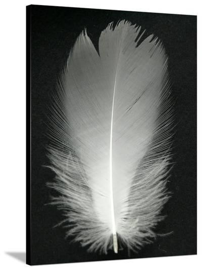 Feather Bird Silver-Wonderful Dream-Stretched Canvas Print