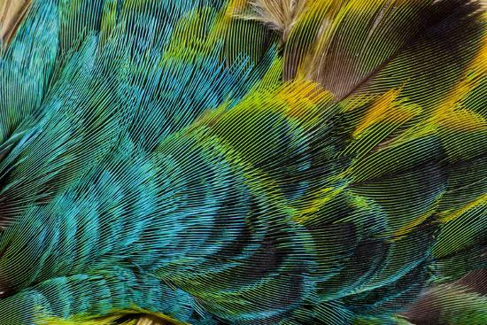 Feather Design-Darrell Gulin-Photographic Print