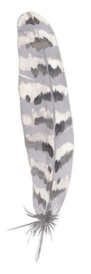 Feather Drift II-Sandra Jacobs-Giclee Print