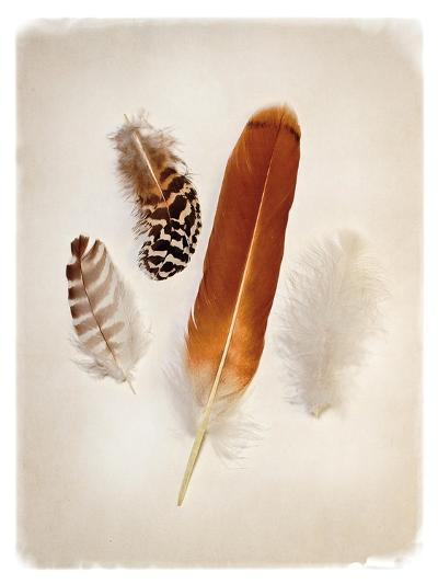 Feather Group I-Debra Van Swearingen-Art Print