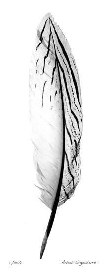Feather II-Anthony Tahlier-Giclee Print