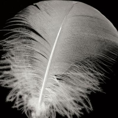 Feather III-Jim Christensen-Photographic Print