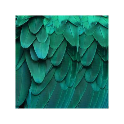 https://imgc.artprintimages.com/img/print/feathered-friend-aqua_u-l-f8iuj60.jpg?p=0