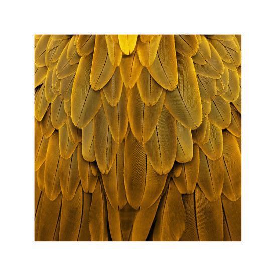 Feathered Friend - Golden-Julia Bosco-Giclee Print