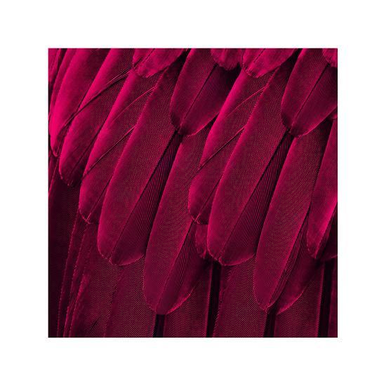 Feathered Friend - Magenta-Julia Bosco-Giclee Print