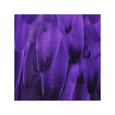 Feathered Friend - Purple-Julia Bosco-Giclee Print