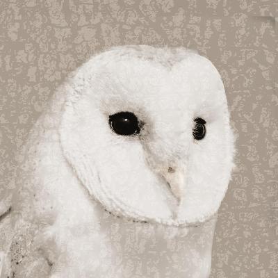 Feathered II-Anna Polanski-Art Print