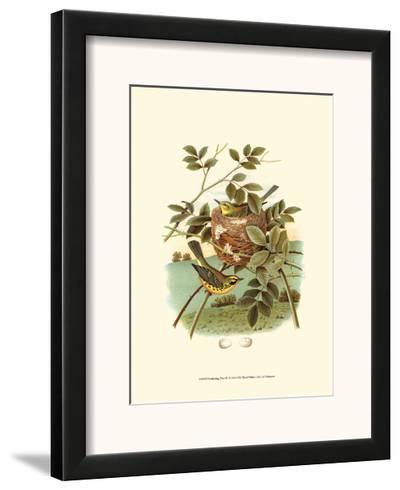 Feathering Nest IV--Framed Art Print