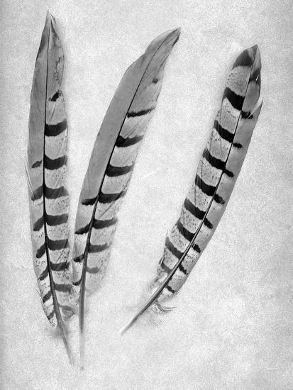 Feathers B-W #1-Alan Blaustein-Photographic Print