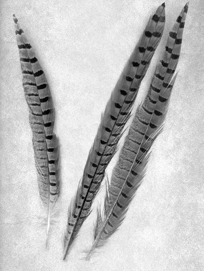 Feathers B-W #3-Alan Blaustein-Photographic Print