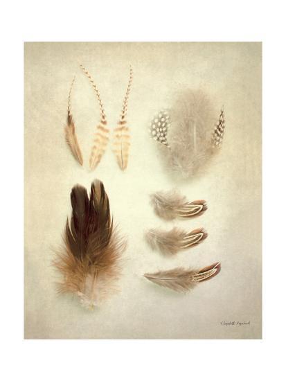 Feathers II-Elizabeth Urquhart-Art Print