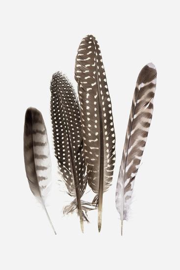 Feathers II-PI Studio-Art Print