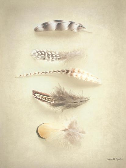 Feathers III-Elizabeth Urquhart-Art Print