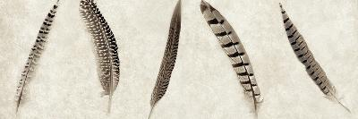 Feathers Panel #1-Alan Blaustein-Photographic Print
