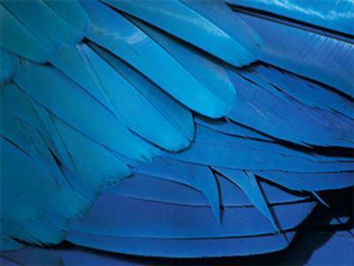 Feathers-Rainer Kiedrowsky-Art Print