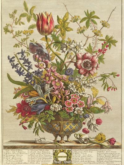February, from 'Twelve Months of Flowers' by Robert Furber (C.1674-1756) Engraved by Henry Fletcher-Pieter Casteels-Giclee Print