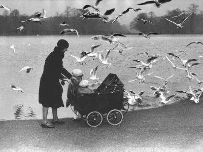 Feed the Birds--Photographic Print