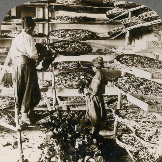 Feeding Silk Worms their Breakfast of Mulberry Leaves, Lebanon Mountains, Syria, 1900s-Underwood & Underwood-Giclee Print