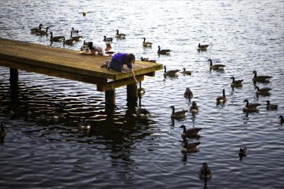 Feeding the Geese IV-Alan Hausenflock-Photographic Print