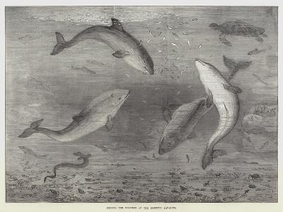 Feeding the Porpoises at the Brighton Aquarium-Samuel Read-Giclee Print