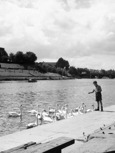 Feeding the Swans--Photographic Print
