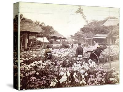 Iris Garden in Tokyo, C.1867-80