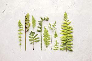 Flat Lay Ferns I by Felicity Bradley