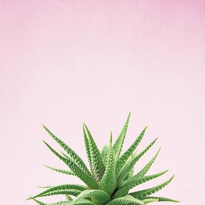 Succulent Simplicity I on Pink