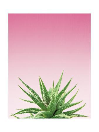 Succulent Simplicity I Pink Ombre Crop
