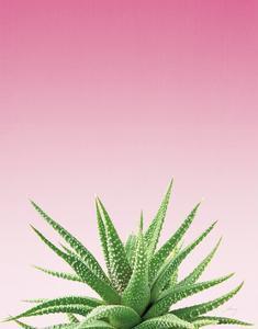 Succulent Simplicity I Pink Ombre Crop by Felicity Bradley