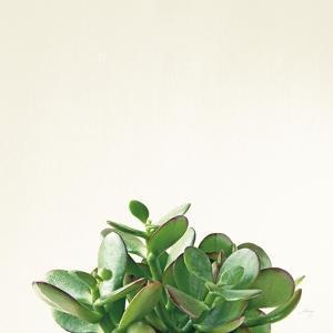 Succulent Simplicity III Neutral by Felicity Bradley