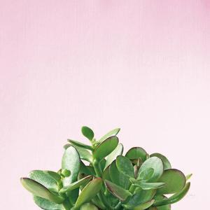 Succulent Simplicity III on Pink by Felicity Bradley