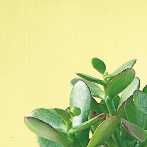 Succulent Simplicity IV by Felicity Bradley