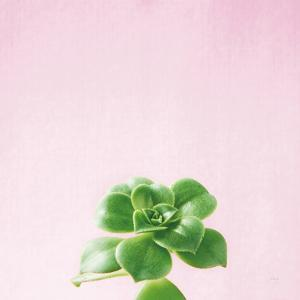 Succulent Simplicity VII on Pink by Felicity Bradley