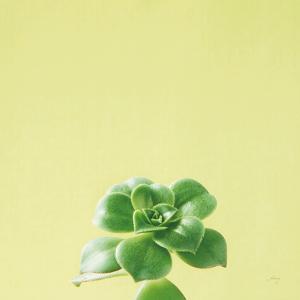 Succulent Simplicity VII by Felicity Bradley