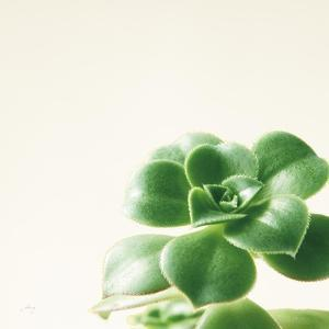 Succulent Simplicity VIII Neutral by Felicity Bradley