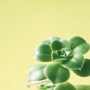 Succulent Simplicity VIII by Felicity Bradley