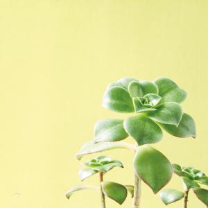 Succulent Simplicity X by Felicity Bradley