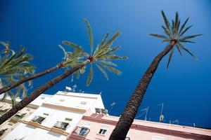 Building in Cadiz in Spain with Palm Trees by Felipe Rodriguez