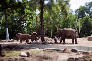 Elephants at Zoo by Felipe Rodriguez