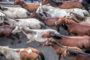 Herd of Horses, -Saca De Las Yeguas- Festival by Felipe Rodriguez
