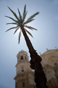 Palm Tree in Cadiz by Felipe Rodriguez
