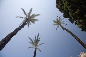 Palm Trees in Cadiz by Felipe Rodriguez