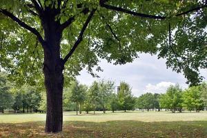 Tree in a Park in Germany by Felipe Rodriguez