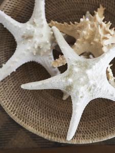 Starfish in a basket by Felix Wirth