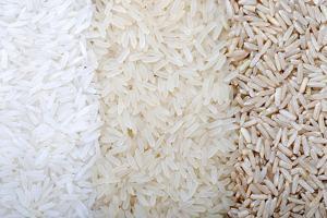 Three Rows of Rice Varieties by felker