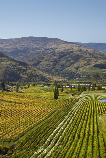 Felton Road Vineyard, Autumn, Bannockburn, Central Otago, South Island, New Zealand-David Wall-Photographic Print