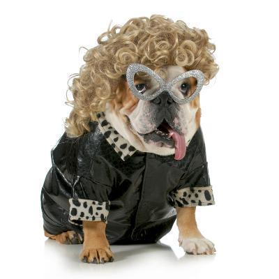 Female Dog - English Bulldog Wearing Blonde Wig and Black Leather Coat-Willee Cole-Photographic Print